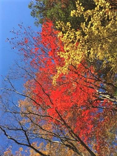 マゼノ渓谷 紅葉 登山 熊本市中央区 着物専門店 わのくに
